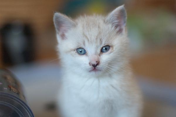 猫に炭パウダー